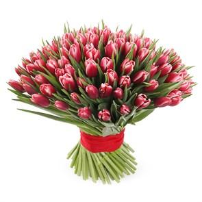 Букет 101 королевский тюльпан, алые
