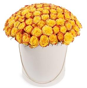 101 роза Хай Еллоу в шляпной коробке