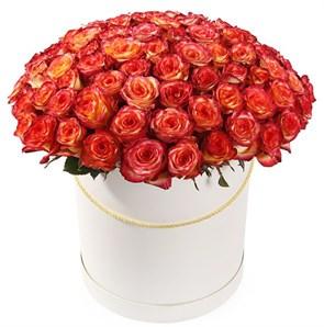 101 роза Хай Мэджик в шляпной коробке