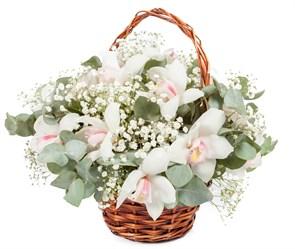 Букет с орхидеями Звезда родилась