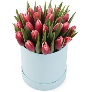 25 королевских тюльпанов в белой коробке, алые