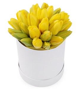 25 королевских тюльпанов в белой коробке, желтые
