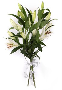 Букет 3 лилии Белая красавица