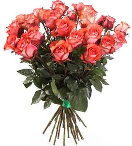 Букет 25 роз Игуана, коралловые