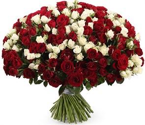 Букет 101 кустовая роза, красно-белый микс