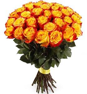 Букет 35 роз Хай Еллоу