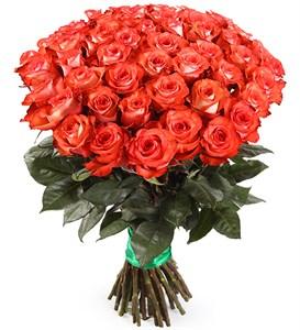 Букет 51 роза Игуана, коралловая