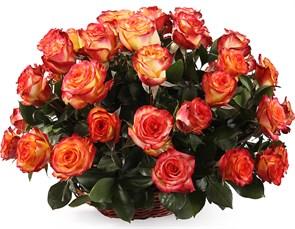 51 роза Хай Мэджик в корзине