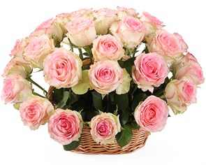 35 роз Эсперанс в корзине