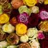 Букет 57 роз - фото 5750