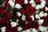 Букет 101 кустовая роза, красно-белый микс - фото 5810