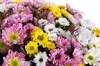 Букет 51 хризантема Сантини - фото 6189