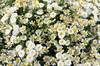 Букет из ромашек Полянка чудес - фото 6263