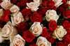 Букет Магдалина, 101 роза микс - фото 6283