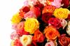 Фламандская легенда (101 роза) в коробке - фото 6351