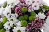 Букет 25 кустовых хризантем - фото 6489