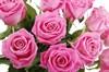 Букет 17 роз Аква - фото 6498