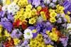 Букет Цветок папоротника - фото 6633