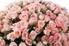 Букет 101 кустовая роза Свит Сара - фото 6884