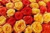 Букет 101 роза, Солнечный микс - фото 6904