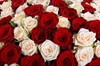 Букет 201 роза микс - фото 6933