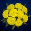 9 желтых хризантем - фото 7176
