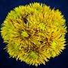 Солнечный букет хризантем - фото 7181