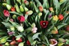 Композиция Весеннее головокружение (501 тюльпан) - фото 7189
