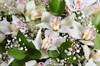 Букет с орхидеями Симфония в корзине - фото 7266